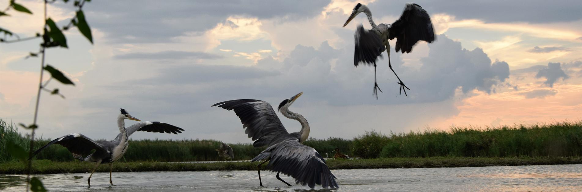 Birdlife in Hungary